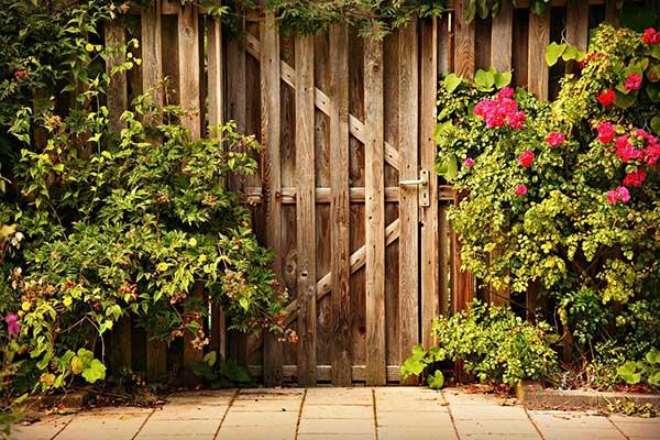 gardening and landscaping sunshine coast